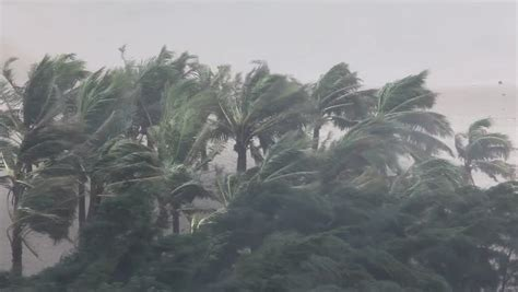 Palm Trees Hurricane Winds