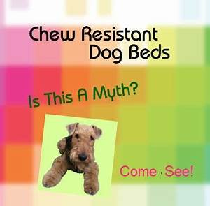 23 best images about chew resistant dog beds on pinterest for Shred proof dog bed