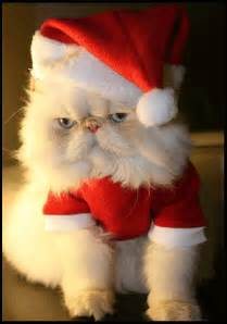 santa cat fearless cat humour the of fearless living
