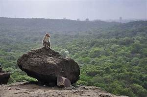 Sanjay Gandhi National Park Tourist Guide | Borivali ...