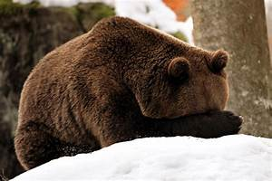 Why Do Animals Hibernate?