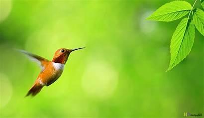 Bird Desktop Wallpapers Backgrounds Wallpapersafari