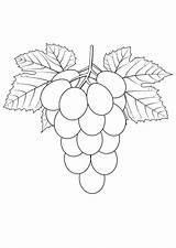 Grapes Coloring Pages Raskraska Vinograd Strawberry Coloringtop sketch template