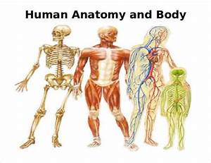 15  Free Body Diagram Templates  U2013 Sample  Example  Format