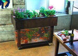 hydroponic garden fits   kitchen