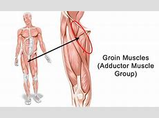Pictures Groin Muscles, ANATOMY LABELLED
