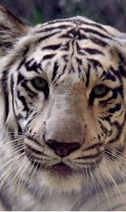 Zoo - Wildlife World