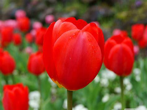 regalare fiori significato linguaggio dei fiori