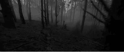 Forest Dark Woods Scary Gifs Horror Creepy