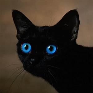 black+kitten+with+blue+eyes | black cat with blue eyes ...