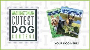 Extended Entry! Submit Your Adorable Dog to Washingtonian ...