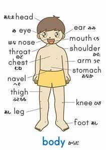The Body Parts In Japanese  Myonlinejapaneseteacher Com