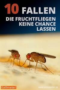 Mücken Bekämpfen Hausmittel : 25 einzigartige fruchtfliegenfalle ideen auf pinterest ~ Articles-book.com Haus und Dekorationen