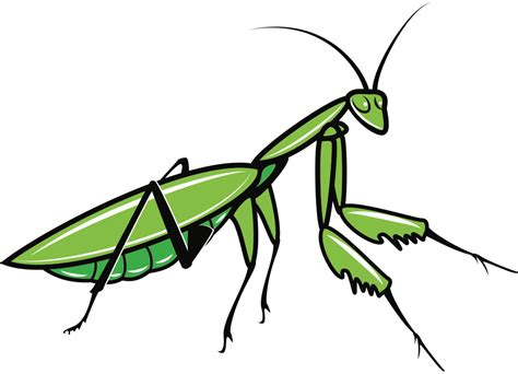 onlinelabels clip art praying mantis