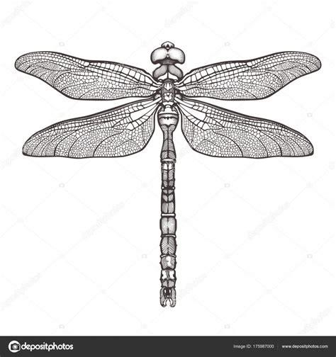 schwarze libelle aeschna viridls isoliert auf weiem