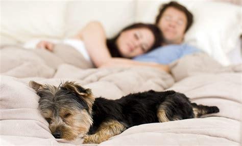Es Saludable Dormir Con Tu Perro En La Misma Cama?