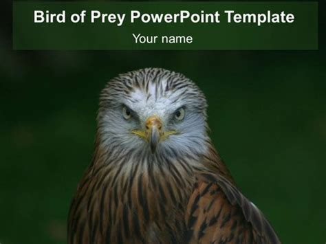 bird  prey powerpoint template