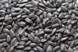 BLACK OIL SUNFLOWER SEEDS (BOSS) for Horses | The Equine ...