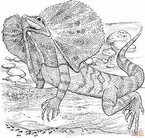 Frilled Lizard coloring page | Free Printable Coloring Pages