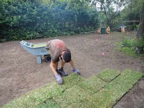 when to lay sod laying a sod lawn practical advice mybktouch com
