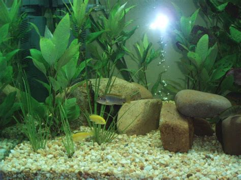 home made fish aquarium decorated home design elements