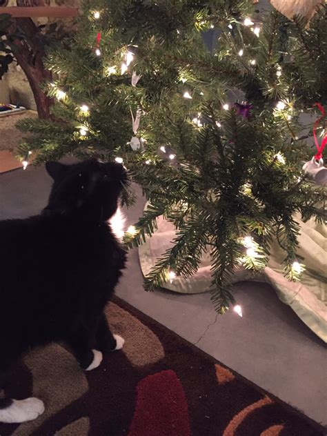 28 best cats real christmas trees real live christmas