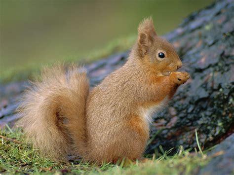 funny squirrels wallpaper for desktop funny animal