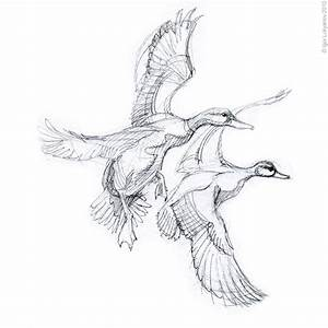 Flying Duck Drawing