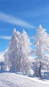 White Winter Wonderland Tree