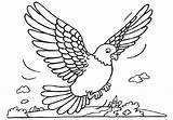Pigeon Coloring Pages sketch template