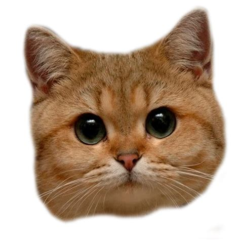 Cat Head Png By Madcatmd On Deviantart