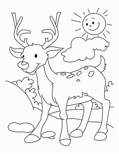 Deer Coloring Pages Hunting Buck Printable Doe