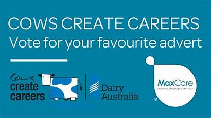 Cows Careers Create Advert Maxcare Vote Favourite