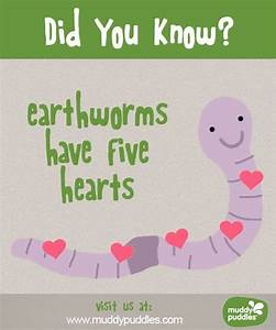 Earthworms Have 5 Hearts