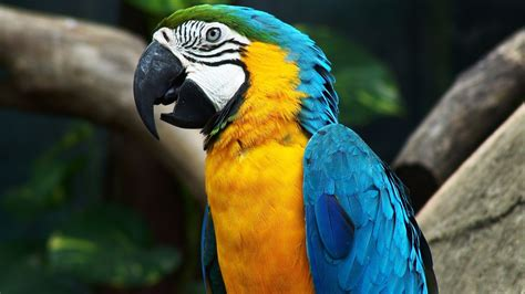 animals, Birds, Macaws Wallpapers HD / Desktop and Mobile ...