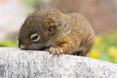 tiny squirrel luckily rescued  pics izismilecom