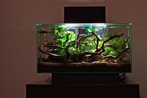 Fluval Edge Aquascape by Fluval Edge Planted Search Aquascape Goldfish