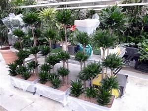 Hydrokultur Pflanzen Kaufen : hydrokultur ~ Buech-reservation.com Haus und Dekorationen