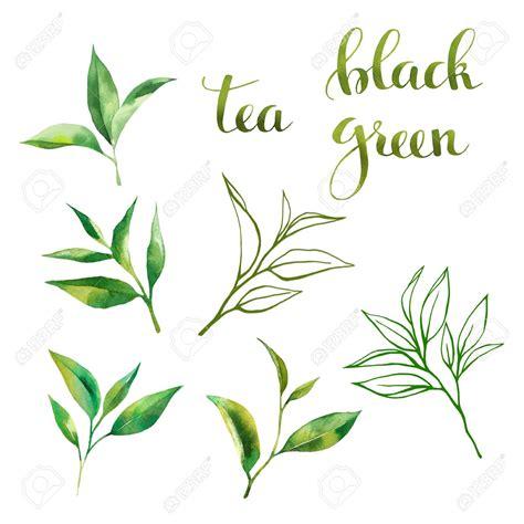 tea leaves drawing  getdrawingscom   personal
