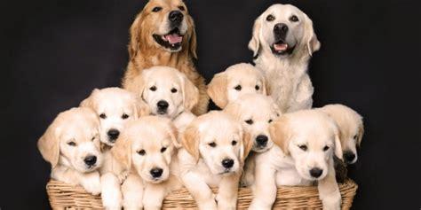 adorable  happy dog parents posing
