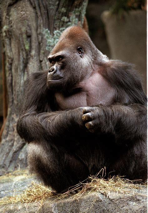 animals zoos zoo aging met care