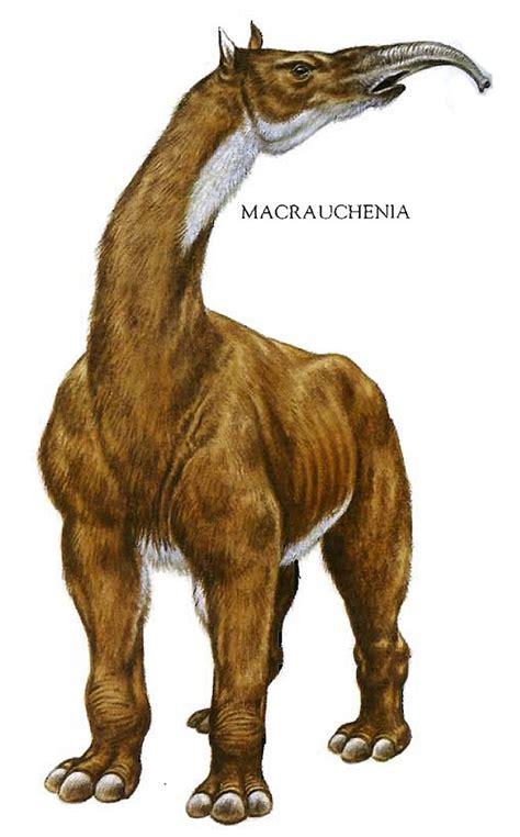 giraffe elephant horse hybrid dinosaurs prehistoric macrauchenia mammals strange references 1000 sloth 9gag