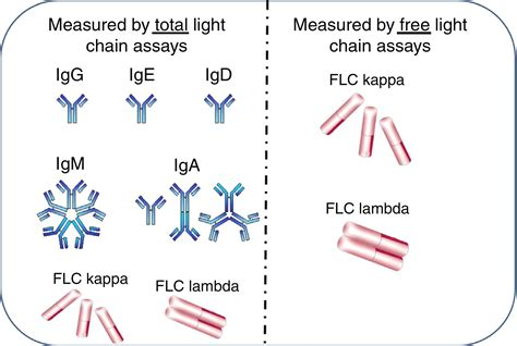 kappa free light chain high living with quot abnormal quot free light chain ratios the