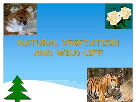 natural vegetation  wildlife authorstream