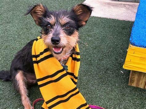 gryffindogs  hufflefluff animal shelter sorts dogs