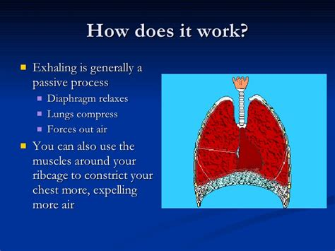 Respiratory System And Immune System. How To Promote New Business I Need Cable Tv. Virginia Llc Registration Preston Tucker Car. Lifetime Value Analysis Tutoring In Baltimore. Plastic Paper Holders For Walls. Residential Camera Security Systems. Bachelors Of Science In Nursing Schools. Nursing Programs Charlotte Nc. Engineering Universities In California