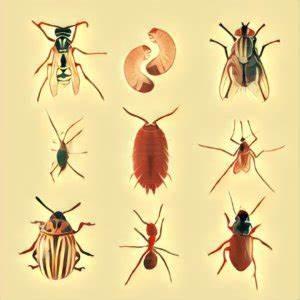 Ameisen In Der Wand : insekten traum deutung ~ Frokenaadalensverden.com Haus und Dekorationen