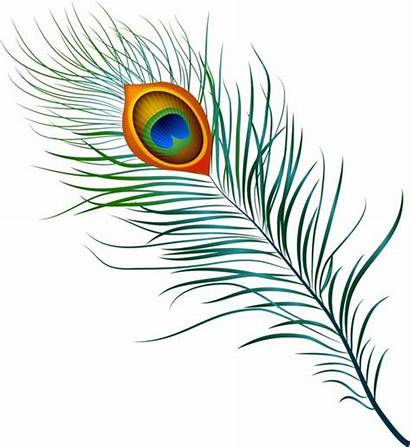 Peacock Feather Vector Clip Pankh Feathers Mor