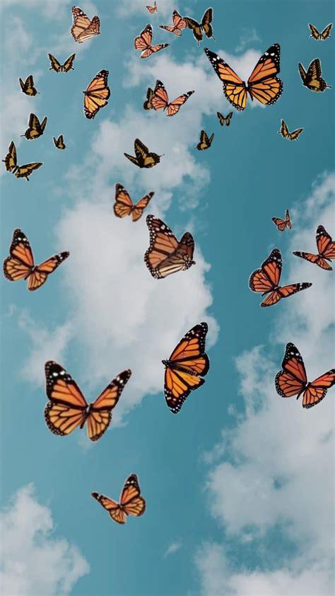 butterfly in sky aesthetic wallpaper in 2020 butterfly