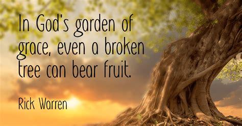 garden of grace in god s garden of grace even a broken tree can fruit